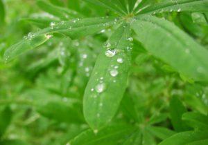 雨の雫が滴り落ちそうな植物の葉